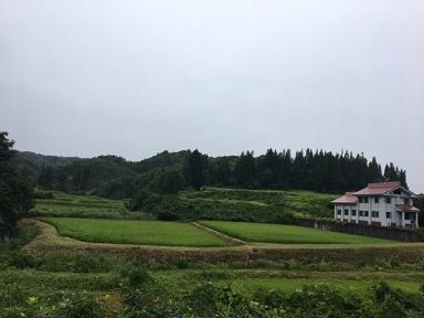 カメ草刈り2
