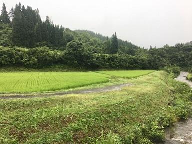 カメ草刈り1