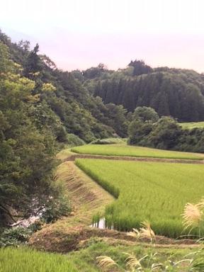 カメ草刈り3