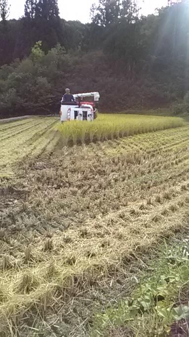 2019稲刈り