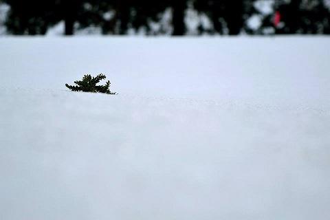 雪の上アップ