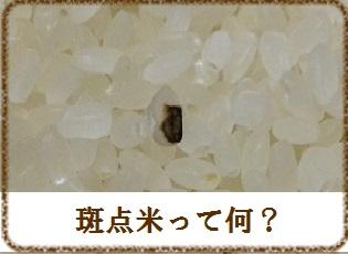 斑点米って何?