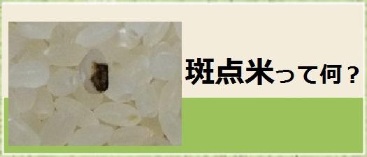 斑点米バナー2