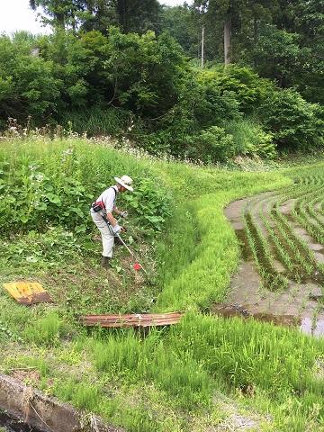 今週も草刈り